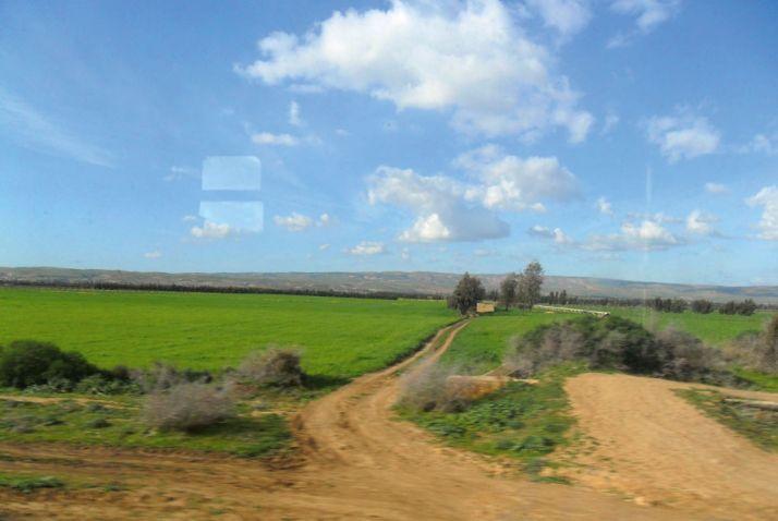 Périmètre agricole dans l'Oranais, au nord de l'Algérie. Photos : M. Naïli