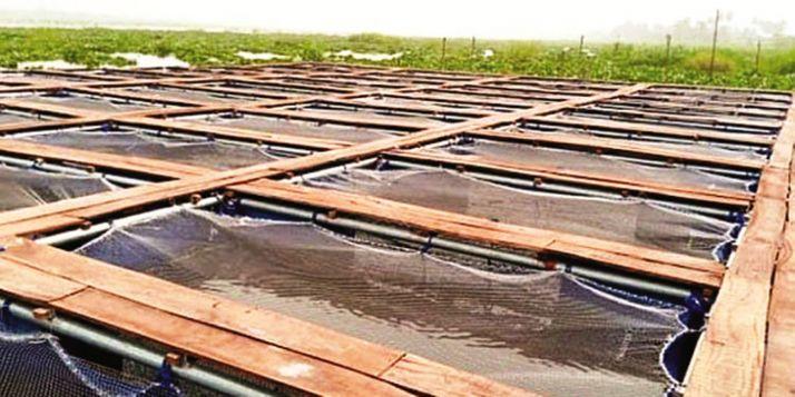 L'aquaculture en cage à Badagry, au sud-ouest du Nigeria.