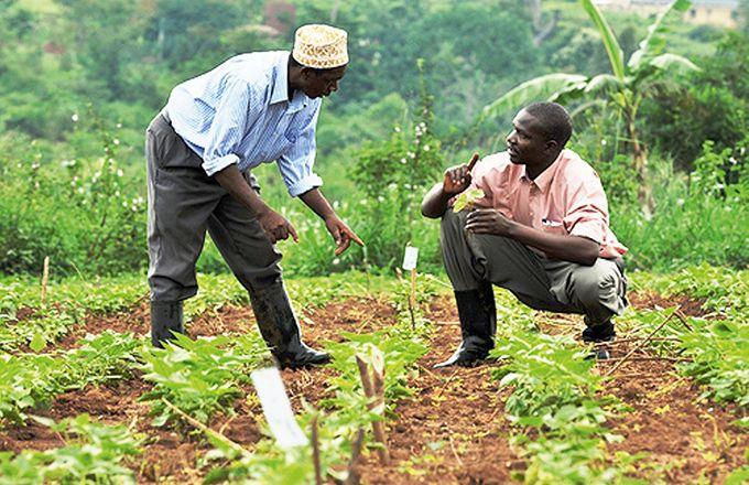 """Résultat de recherche d'images pour """"Afrique """"Agriculture"""""""""""