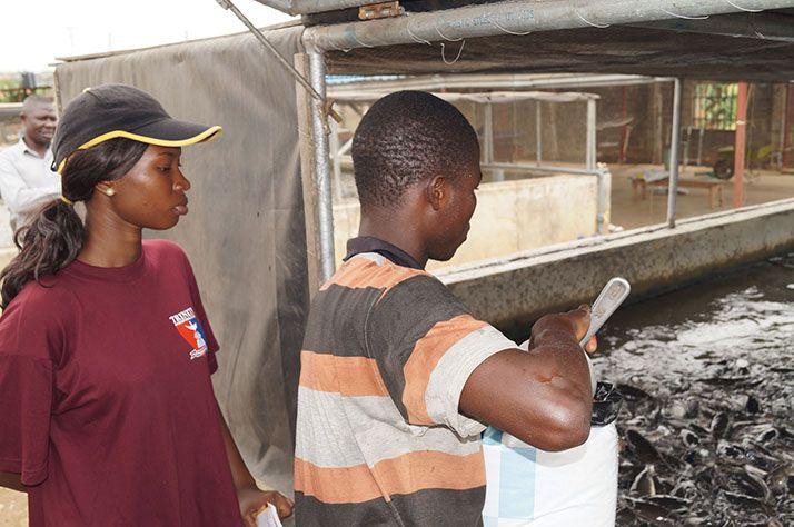 Alimentation dans une ferme aquacole du Nigeria. Photos : E. Pruvost