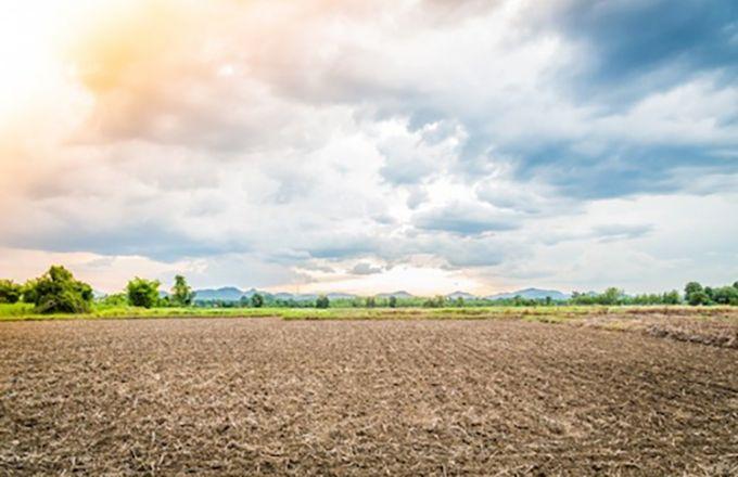 Sur les 3,4 millions d'hectares de terres agricoles que compte le Togo, seulement 45 % du total sont valorisés. Photo: ministère de l'Agriculture du Togo