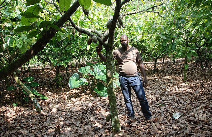 Avec cette application, les planteurs de cacao ivoiriens –ici dans la région de M'Brimbo– pourront se tenir informés des dernières règles sanitaires concernant le Covid-19. Photo: Antoine Hervé