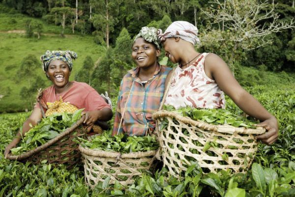African Women in Agriculture (AWA)