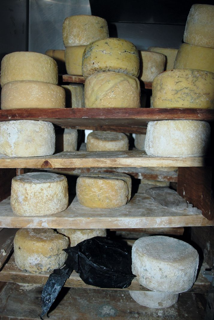 Affinage des fromages de vaches chez Ibrahima Fall, à Kolda.