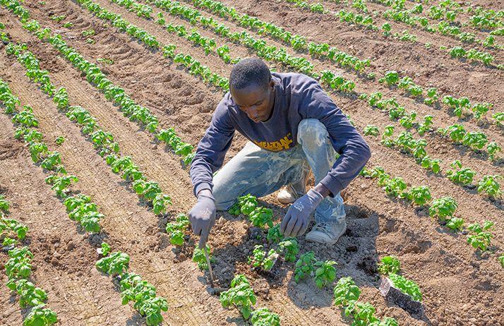 L'agriculture africaine a besoin d'aide, enfin, parce qu'à la fin, c'est elle qui aidera le monde. © Max Barattini/Fotolia