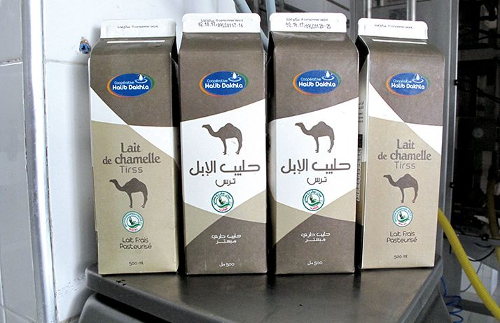 Les  packs de lait de chamelle d'un demi-litre sont vendues 10 dirhams, soit presque le double du lait de vache. Photo: François Brey