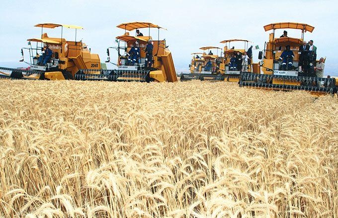 L'Algérie place l'innovation au cœur de l'agriculture avec l'introduction de techniques nouvelles et d'équipements modernes. Photos: Mohamed Naïli