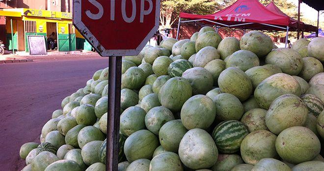 La pastèque est un fruit très consommé et très cultivé au Maroc et dans tout le Maghreb. Photo : DR
