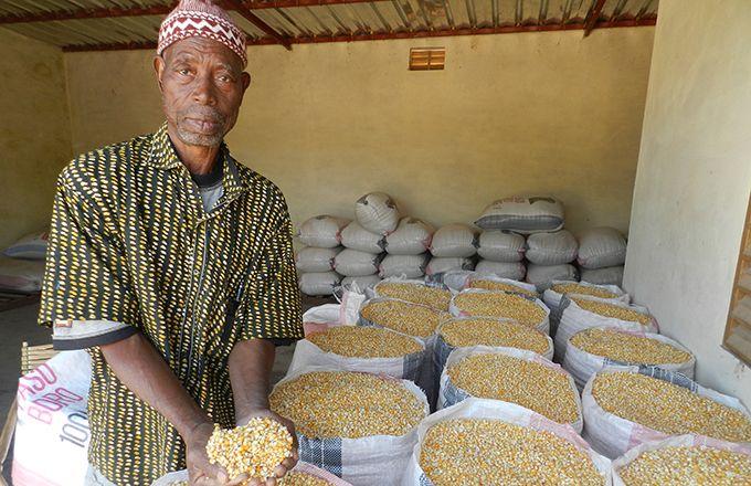 Le plan comprend notamment la production de deux millions de tonnes de maïs. Photo: Antoine Hervé