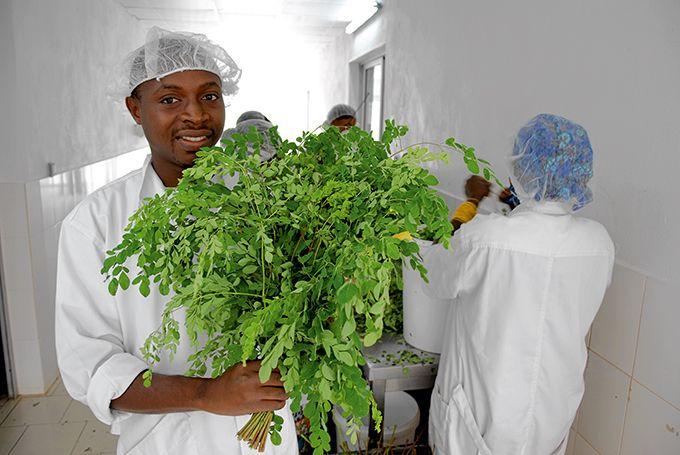 Jean-Marc N'Da, responsable de l'unité  de transformation du moringa. Photos : Antoine Hervé