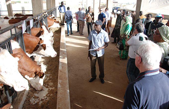 Lors d'une visite d'élevage en marge du Siagro 2018. Photod'archive : Antoine Hervé