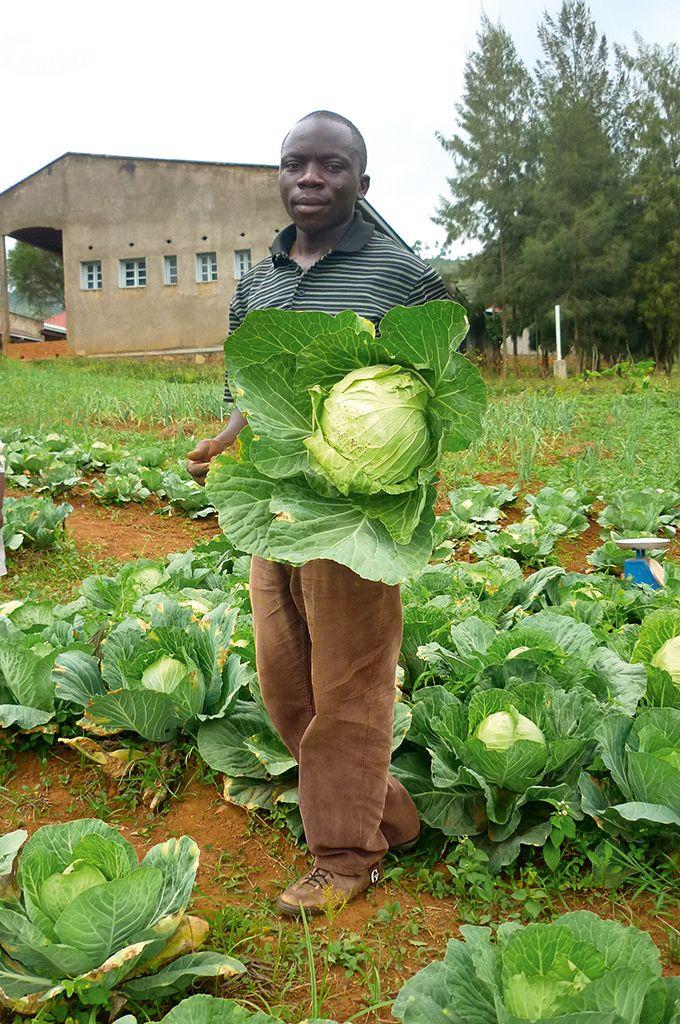 veg_fermier_congolais_choux.jpg