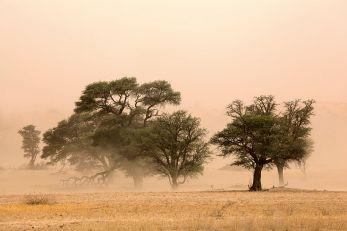 Chaleur et poussière : les deux ennemis des tracteurs nigérians © EcoView/Fotolia