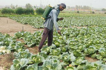 Le pulvérisateur à main est souvent utilisé  pour traiter les récoltes.