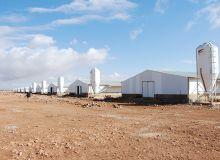 Les dix poulaillers, ou «hangars», comme dit notre guide, de l'EURL Khider, à Hassi Fedoul, dans la wilaya de Djelfa. © A. Hervé