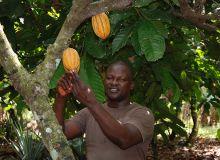 La Côte d'Ivoire est, de loin, le premier producteur mondial de cacao. Ici, un planteur dans la région de M'Brimbo, entre Abidjan et Yamoussoukro. Photo: Antoine Hervé