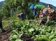 Les femmes de WEP-Togo en pleine récolte d'épinards. Photo: Kiki Tassi
