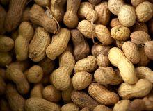 Ces nouvelles variétés devraient permettre au Sénégal d'asseoir sa place parmi les plus grands producteurs mondiaux d'arachide. Photo: Agarianna/Fotolia