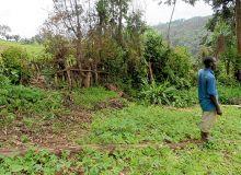 Justin Kithima dans un champ de culture vivrière.