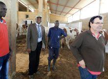 Le Dr Dramé, en cravate, Jean-Paul Brun (à dr.), de la société Coopex Montbéliarde, et deux employés de la ferme. Photo: A. Hervé