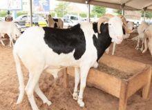 Le Salon international du bétail et de la viande d'Afrique de l'Ouest aura lieu à Lomé en mai
