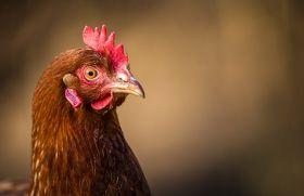 Sécuriser la conduite des élevages avicoles avec Techna Vitamix.