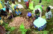Certains enseignants bouclent leur fin de mois en faisant travailler les élèves au champ. Photo: Umbo Salama