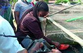 L'élevage en cage du tilapia contribue à l'amélioration de la sécurité alimentaire du Nigeria. Photos: lagosstate.gov.ng
