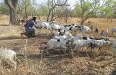 Les éleveurs et petits agriculteurs sont souvent les premiers touchés par l'insécurité alimentaire. Photo : Antoine Hervé