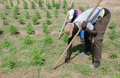 Selon les agences de l'ONU, la redistribution des subventions agricoles devrait améliorer les conditions de vie de 500 millions de petits paysans dans le monde, comme ici près de Thiès au Sénégal. Photo : Antoine Hervé