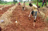 Préparation de la terre pour accueillir une plantation à Ibadan, au Nigeria. Photo: Daouda Aliyou
