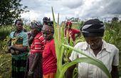 Les agriculteurs résistent mieux au changement climatique lorsqu'ils sont regroupés en organisations de producteurs, comme ici au Rwanda. Photo:  FAO/Marco Longari