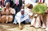 Le président Muhammadu Buhari lance la campagne de riz dans l'État de Kebbi au nord  du Nigeria. Photo: Daouda Aliyou