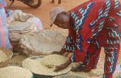 Le maïs est devenu assez cher sur tous les marchés du Bénin. Photo: G. C. Roko