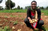 Lydie Masika Kasonia présente la variété qui porte son nom. Photo: M.K. Saliboko